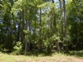 28.5 Acre Tract In Cherokee Springs