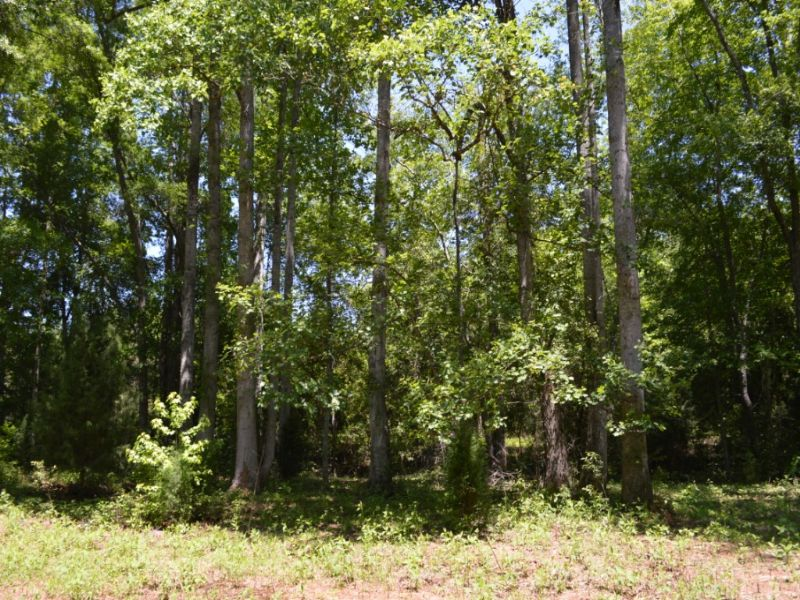 28.5 Acre Tract In Cherokee Springs : Chesnee : Spartanburg County : South Carolina