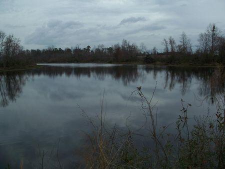 141 (+-) Ac, Farm, Woods, Pond : Albany : Mitchell County : Georgia