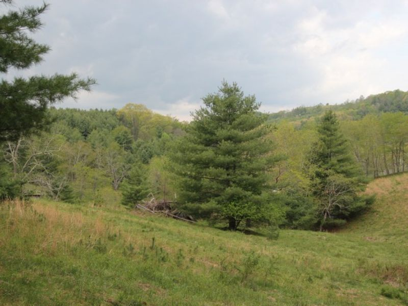 59 Acres In Blue Ridge Mountains : Troutdale : Grayson County : Virginia