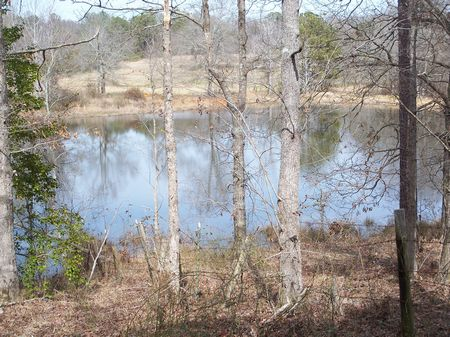 500 (+-) Ac, Pastures, Timber, Pond : Americus : Sumter County : Georgia