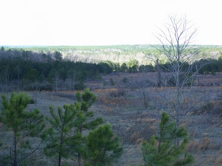 146 Acres, Timberland, Hunting : Butler : Taylor County : Georgia