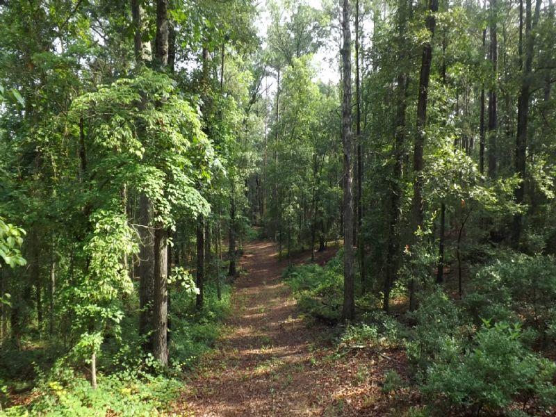 Old Time Farm Turned Timberland : Marshallville : Macon County : Georgia