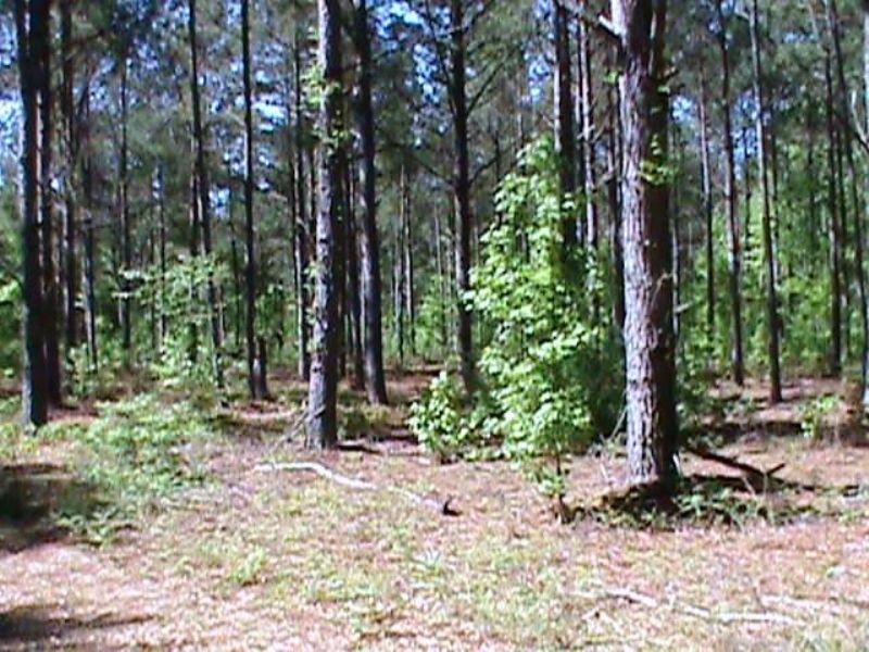 Bowdens Ridge Tract : Dearing : McDuffie County : Georgia