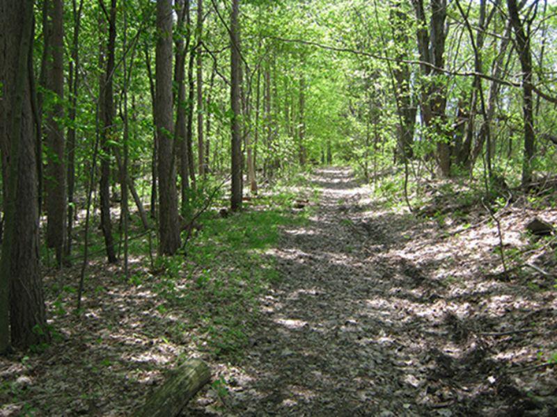 6 Acres Woods Trails Views : Caroline : Tompkins County : New York