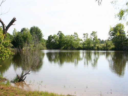 57 Acres Of Rolling Pasture : Lerned : Hinds County : Mississippi
