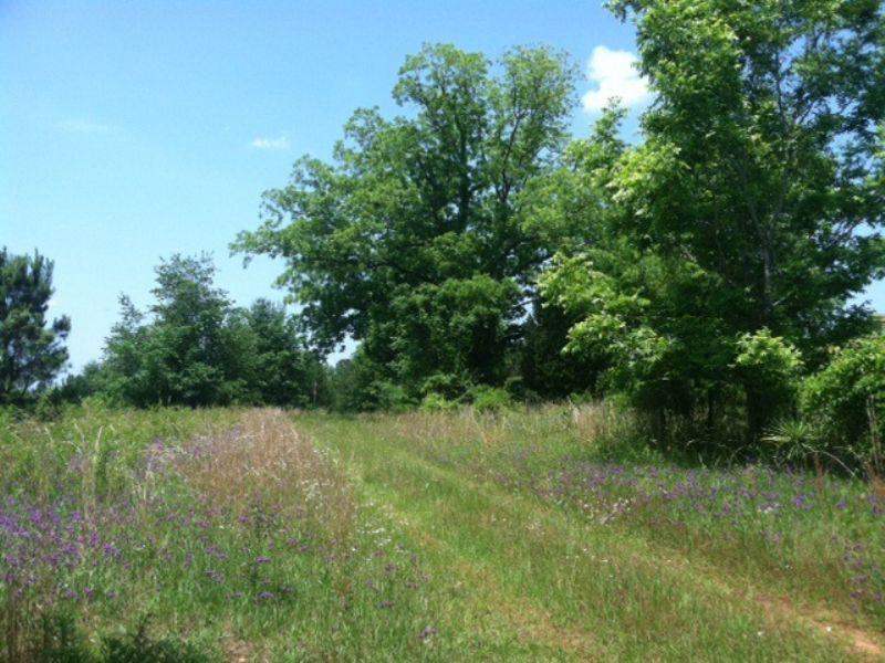 Affordable 60 Acre Rural Retreat : Lumpkin : Stewart County : Georgia