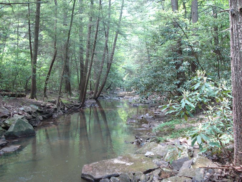 Planted Pines, Streams, Utilities : Crossville : Cumberland County : Tennessee