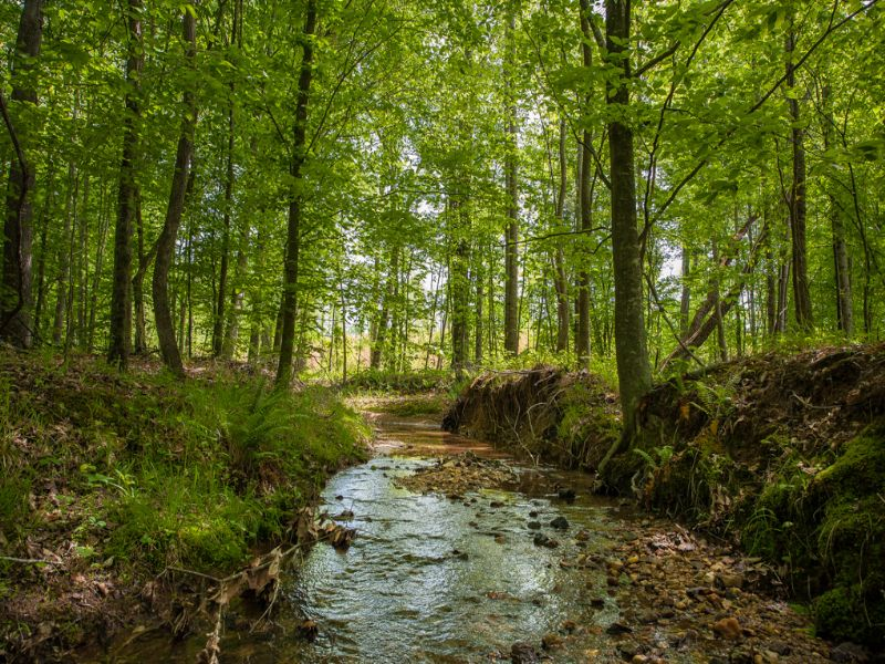 Friddle Tract : Eden : Rockingham County : North Carolina