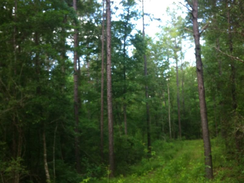 50 Acres : Columbia : Marion County : Mississippi