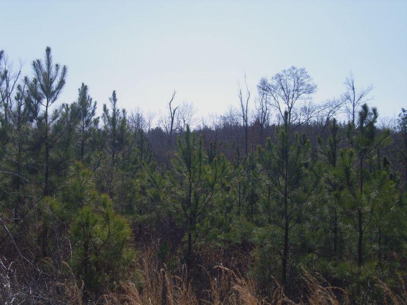 Pearson Tract : Lafayette : Chambers County : Alabama