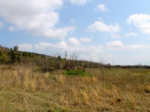 5.01 Acre Daisy Meadows, Terms $230 : Hartshorne : Pittsburg County : Oklahoma