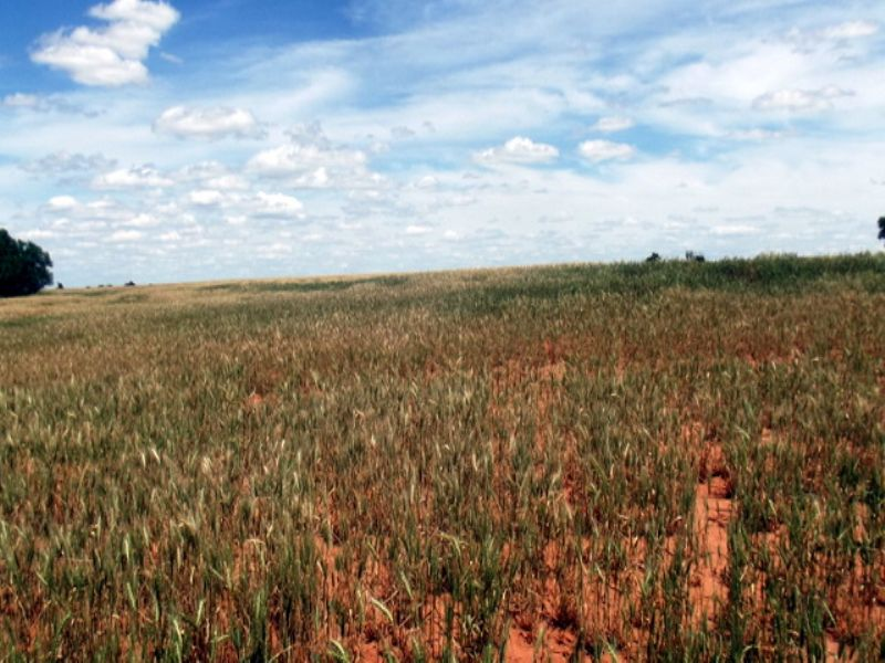 40± Acres, Minerals, Major County : Meno : Major County : Oklahoma