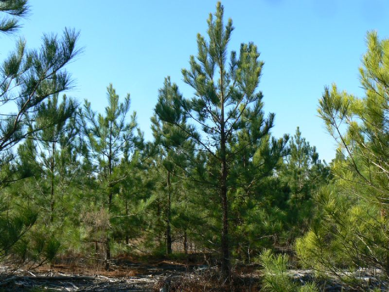 Large Development Or Timber Tract : Kershaw : Kershaw County : South Carolina