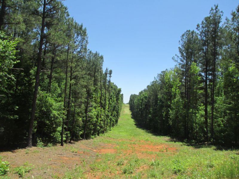 136± Acres Abercrombie Road : Culloden : Monroe County : Georgia