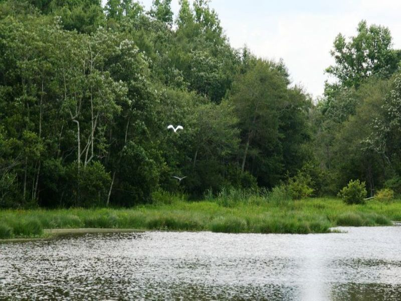 Herrin Farm : Chattahoochee : Gadsden County : Florida