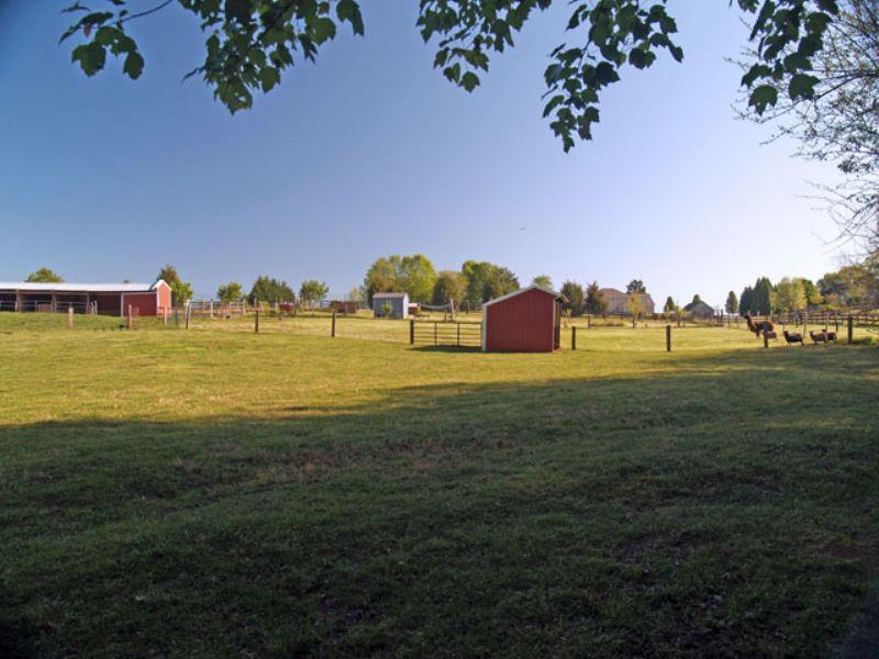 Wollybutt Farm : Stony Point : Albemarle County : Virginia
