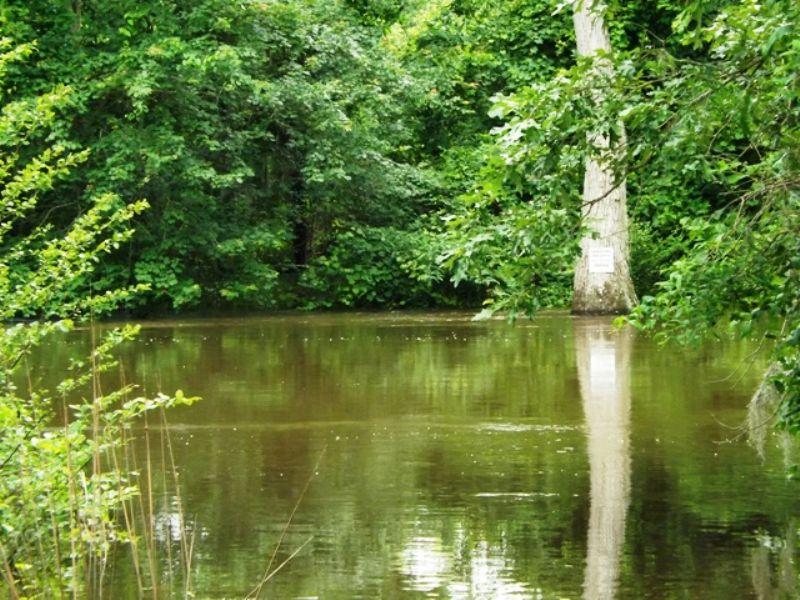 2100+/-acs On The Ogeechee River : Millen : Jenkins County : Georgia