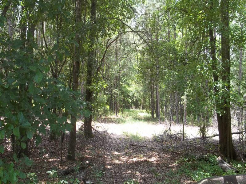 36 Ac Hunting Tract W/ Pond & Cabin : Hemingway : Williamsburg County : South Carolina