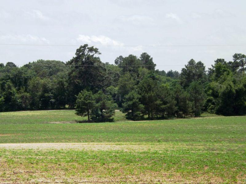 Buck Creek Farm : Statesboro : Bulloch County : Georgia