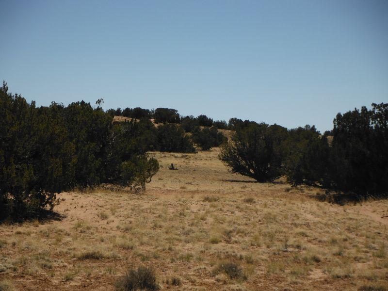 40 Acre Ranch Land Northern Arizona : Chambers : Apache County : Arizona