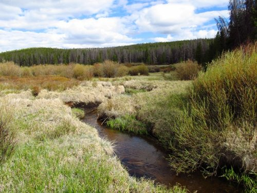 Pelton Creek Acreage : Mountain Home : Albany County : Wyoming