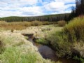 Pelton Creek Acreage : Mountain Home : Albany County : Wyoming