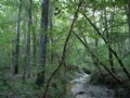 Hurtsboro Timber And Hunting Land