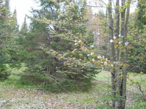 Tbd Section 16 Rd  Mls#1072969 : Covington : Baraga County : Michigan