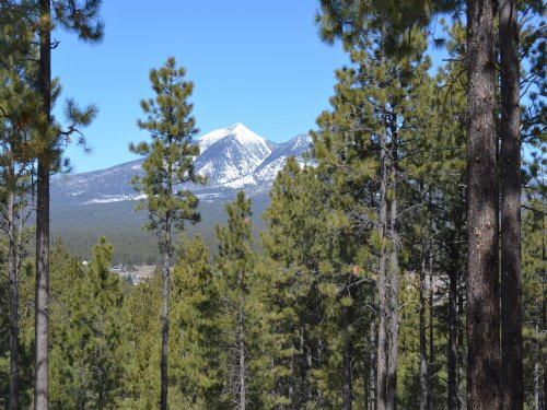 Flagstaff Arizona Forested Estates : Flagstaff : Coconino County : Arizona