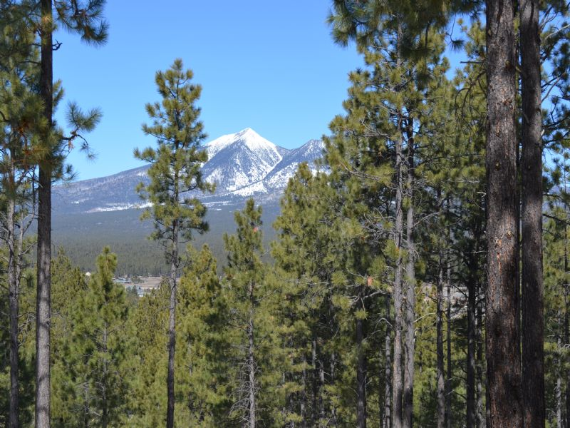Flagstaff Arizona Forested Estates : Flagstaff : Coconino County : Arizona