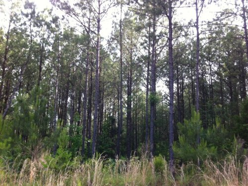 Lake Harris Tract : Tuscaloosa : Alabama