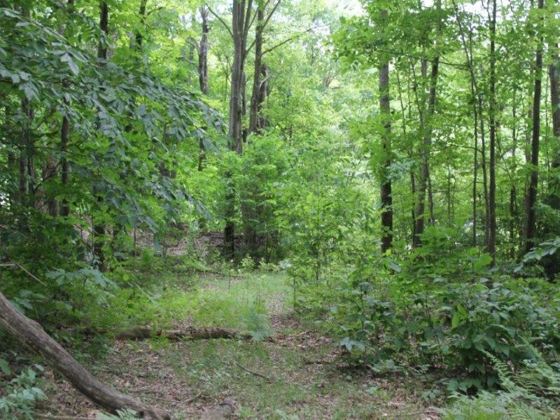 63 Acres Wooded Hunting Land : Parish : Oswego County : New York