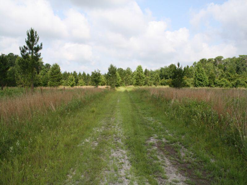 North Field : Jennings : Hamilton County : Florida