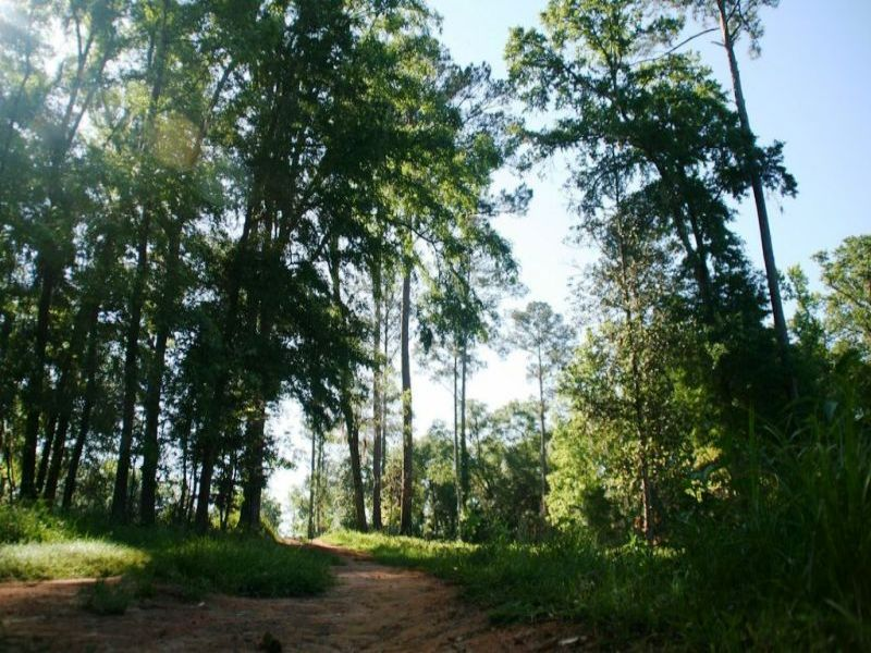 Feather Ridge Plantation : Quincy : Gadsden County : Florida