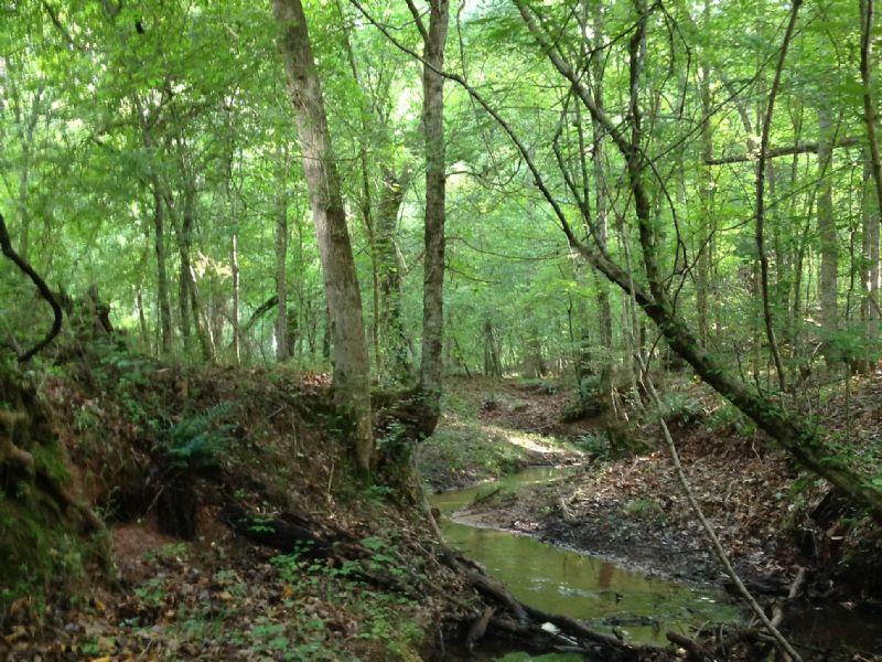 Dixie Wood : Watkinsville : Oconee County : Georgia