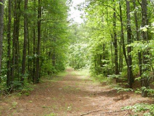 Land For Sale Near Cragford : Cragford : Clay County : Alabama
