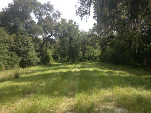 Owner Financing 10 Acres Mol : Brooksville : Hernando County : Florida