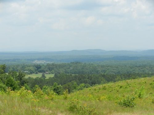 77+/- Acres Near Cragford : Cragford : Clay County : Alabama