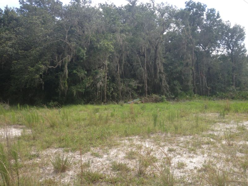 Owner Financing 20 Acres : Brooksville : Hernando County : Florida