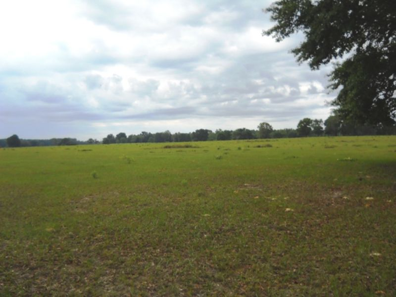 341 Acres Close To Santa Fe River : Fort White : Columbia County : Florida