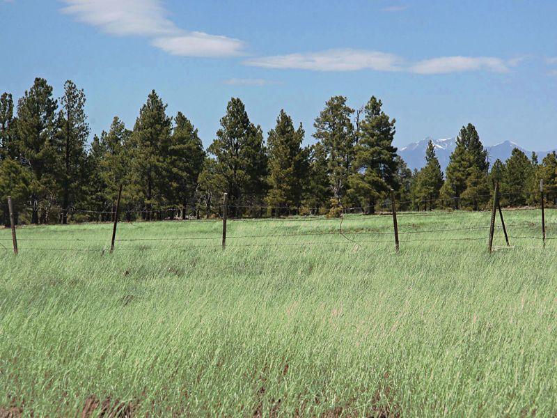Antelope Park Ranch Flagstaff, Az : Munds Park : Coconino County : Arizona