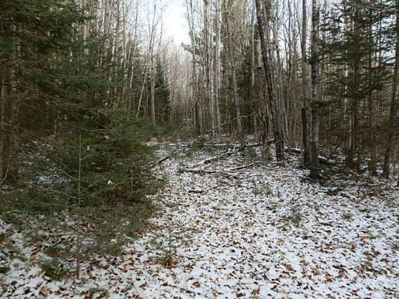 30+acres Prime Hunting Land : Land O'lakes : Vilas County : Wisconsin