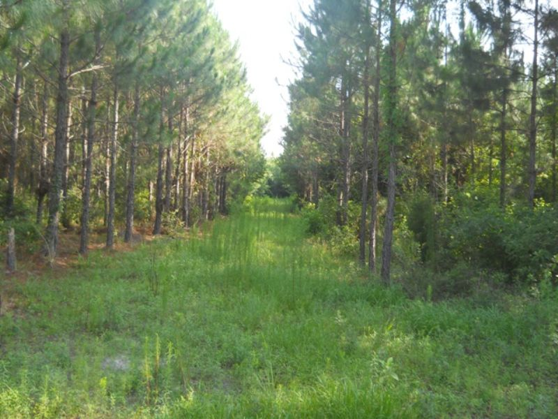 80+ Ac Close To The Suwannee River : Live Oak : Suwannee County : Florida
