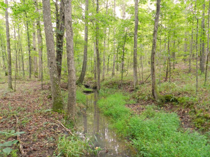 Owner Financing -- Hunting Tract : Sparta : Hancock County : Georgia