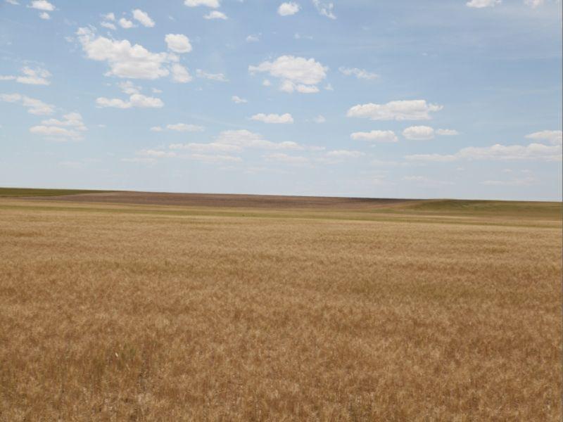 Mekelburg Dryland : Yuma : Washington County : Colorado