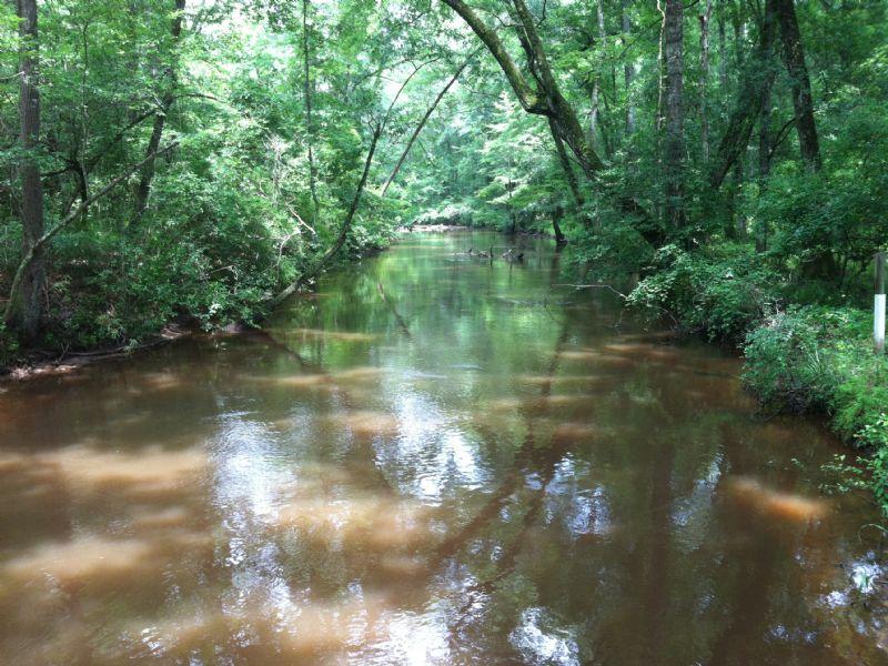 Buck Creek Tract : Ellaville : Schley County : Georgia