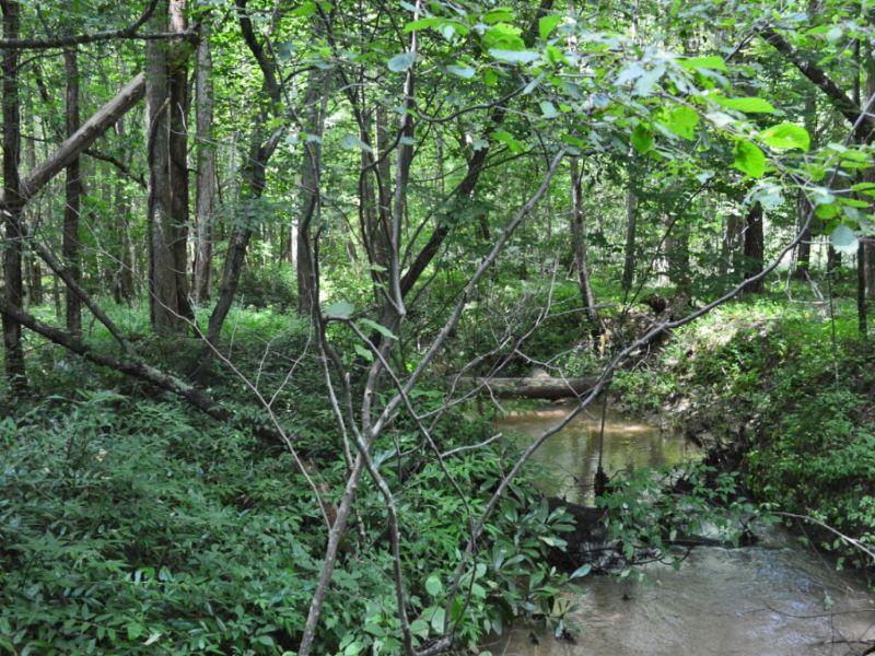 7.08 Acre Estate Homesite : Landrum : Greenville County : South Carolina