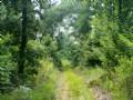 300 Acres Of Prime Deer Habitat in Ohio County, Kentucky