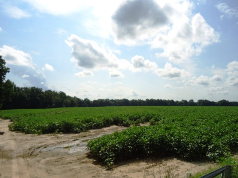 98 +/- Acres : Ozark : Dale County : Alabama
